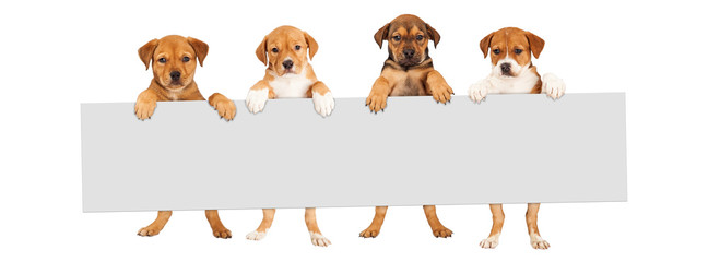 Puppies Hanging Over Banner