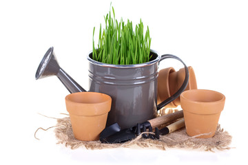 Grass in watering can, pots  and garden tools
