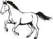 wild horse - 78354140