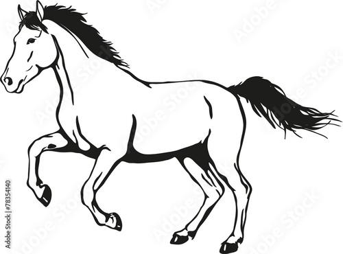 Fototapeta wild horse
