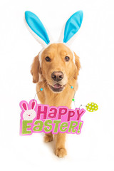 Golden Retriever Dog holding Easter Sign