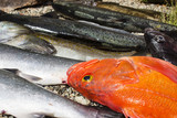 Row of salmon and rockfish on beach