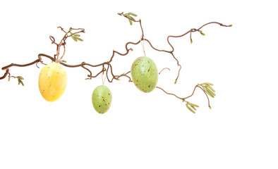 Easter eggs hanging on bush. All on white background.