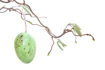 Easer eggs hanging on chinese willow