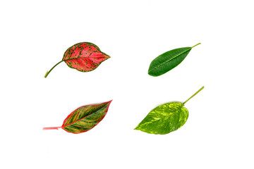 Various leaves isolated