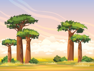 African landscape with baobabs. Madagascar.