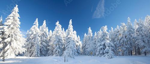 Winterpanorama - 78357718