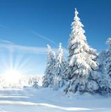 strahlender Sonnenschein im Winter