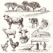 farm, cow, agriculture - hand drawn collection - 78359901