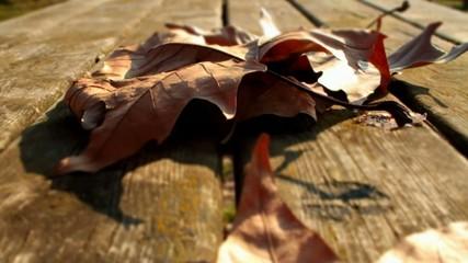 Vento e foglie in primo piano