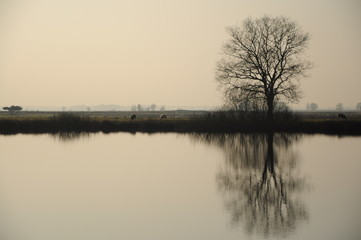 Misty landscape with the reflection of a tree in the water