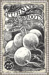 Vintage Greengrocer - Turnip Advertising