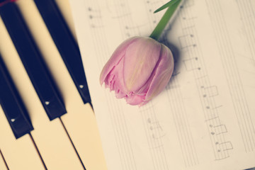 Tulip flower on a musical instrument