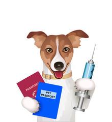 Hund mit Reisepass, Impfpass u Spritze