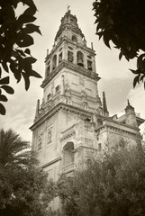 Spanish cathedral. Bell tower. Mezquita. Cordoba. Spain