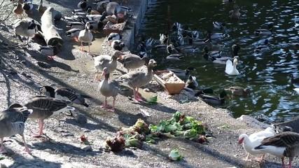 Vögel beim Fressen