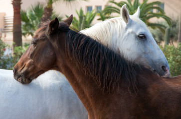 Portrait of embracing horses in the paddock.