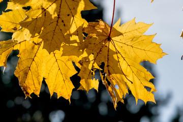 Blätter mit herbstlicher Färbung