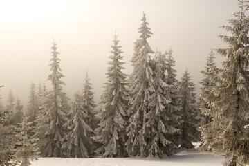 quiet winter forest