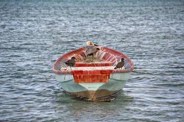 birds on a boat