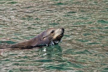 los islotes seal while playing
