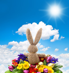 easter bunny with shiny eggs and colorful primula flowers