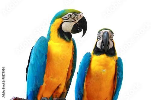 Foto op Aluminium Papegaai Parrots Isolated