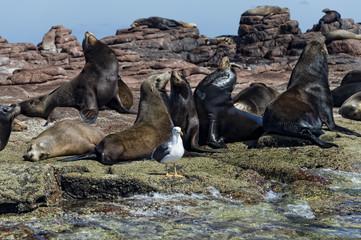 sea lion seals relaxing
