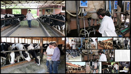 Dairy Farming - Milk Production
