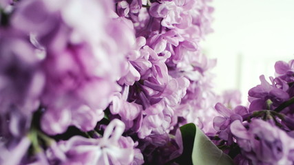 Blossoming Lilac macro shot panning