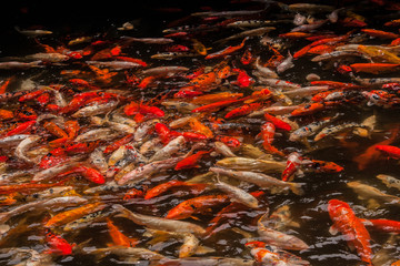 pool teeming with fish
