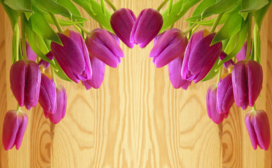 Pink tulips background.