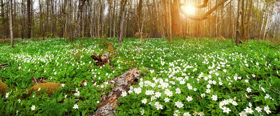 Wood with spring flowers