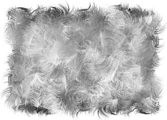 duvet, cheveux gris, kazy