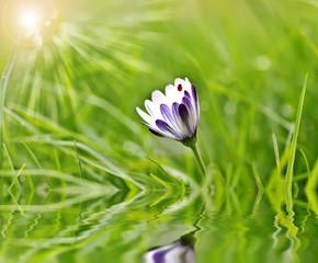 flores entre la hierba verde