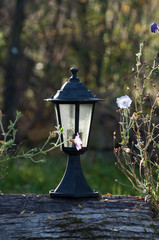 lamp surrounded by flowers