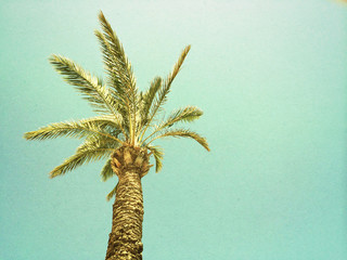 Palm tree against the sky, retro image