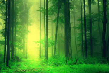 Yellow green forest light © robsonphoto