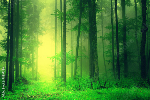 Yellow green forest light