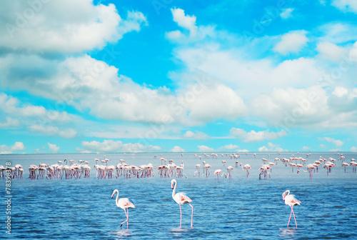 Foto Spatwand Flamingo flock of flamingos in a pond