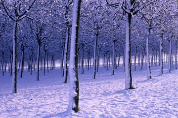 alberi alto fusto in stagione invernale