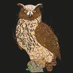 long-eared owl night