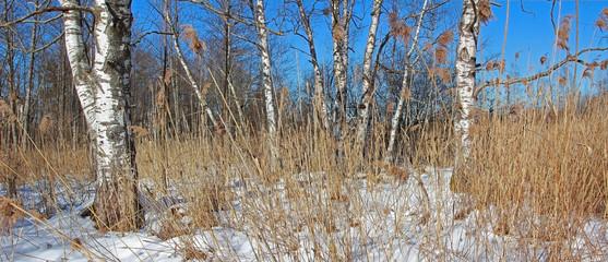 Naturlandschaft Wildmoos im Winter
