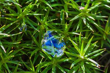 closeup moss in a water drops