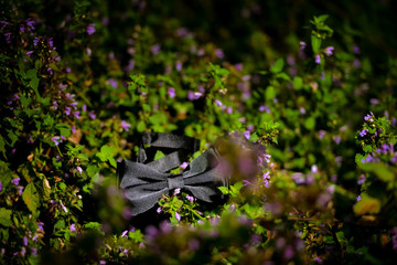 Black bow tie sitting on purple flowers on a summer day
