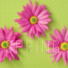 gerbera daisies and the word spring
