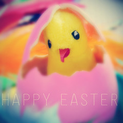 teddy chick in easter egg and the text happy easter