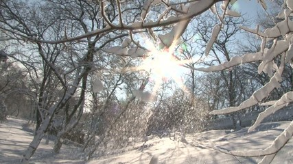 snow trees in the snow city of Odessa