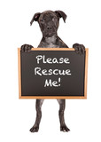 Cute Puppy Holding Rescue Me Sign