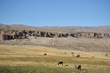 The Altiplano. Bolivia